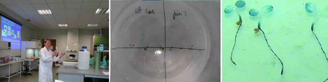 Biotechnologia roślinn